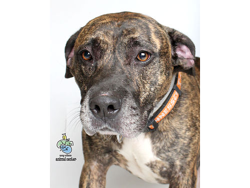 SARGES A 4YR OLD MIXED BREED just wants someone to love Deals wa little bit of separation anxiet