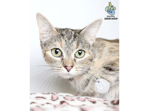 MRS POTTS IS A SWEETHEART At 3yrs old Her temperament  personality match that of her Beauty  th
