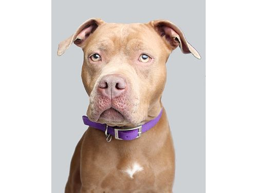 DELILAHS A 5YR OLD CHOCOLATE FEMALE looking for a forever family to cuddle with Loves to play Li