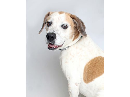 DOBBINS A 7YR OLD HOUNDMIX MALE who may be older but is still playful as ever Hed love to play w