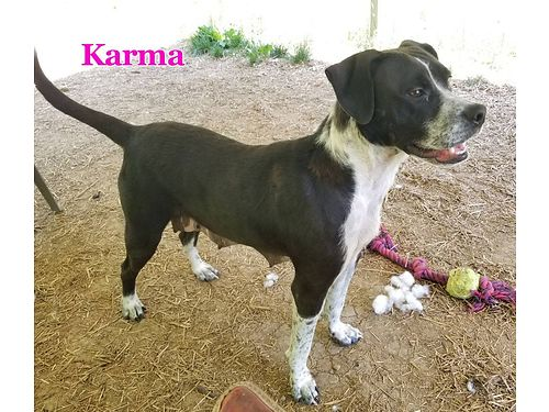 KARMAS A SWEET  PLAYFUL 2yr old hound mix Shes super friendly great with children and other dog