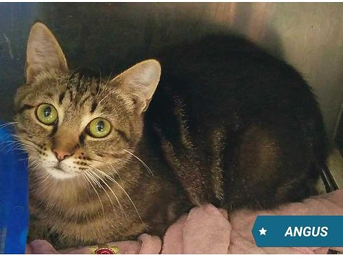 ANGUS IS A 6MO OLD SWEETHEART He is a little shy at first but is warming up a little each day Adop