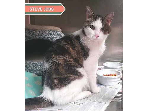 STEVE JOBSS A STUNNING SENIOR clocking in at around 10yrs of age Steve loves people but not pets a