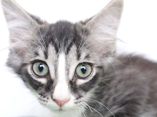 BART IS A SPUNKY adorable fella ready to go home today For info on Bart  other adoptable pets vis
