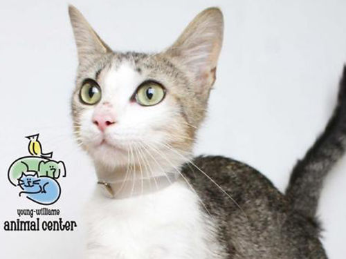 SIS IS A GORGEOUS fun adult cat thats FREE to a good home Shes fully vetted gets along wher r
