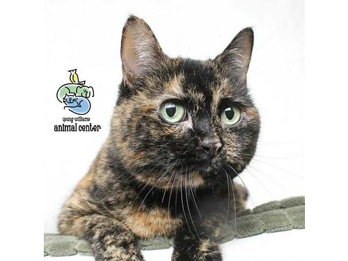 LOUISE HERE I am a 6yr old humorous female who gets along with my roommates  loves attention I am