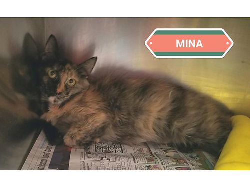 MINAS A 15YR OLD FEMALE whos scared  confused as to why shes in the shelter She needs a Hero w