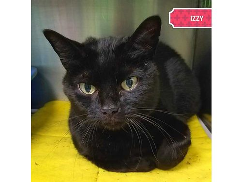 IZZY IS A SUPER SLEEK  extra friendly 7yr old with plenty of love to give her new owner Adoption f