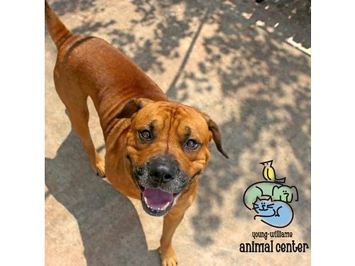 CHURCHILLS A STAFF FAVORITE Hes 3yrs old goofy lovable face wrinkles and all loves to play w