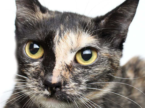 BETH IS A PLEASANT cuddly cat whos free to a good home For info on Beth  other adoptable pets vi