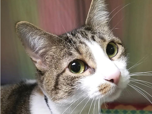 SOPHIES A YOUNG GIRL whos full of energy  loves to play She can play a little rough so a home w
