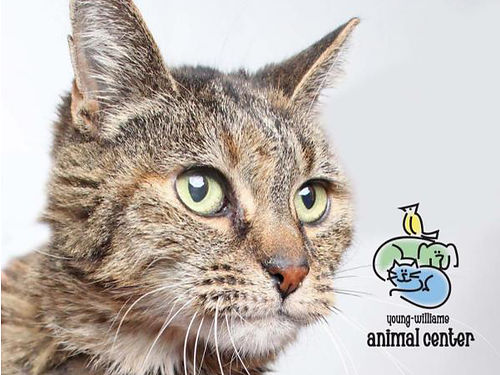 LITTLE DEBBIE IS A GORGEOUS Fluffy 15yr old Senior Cat who deserves a loving home Shes free to th