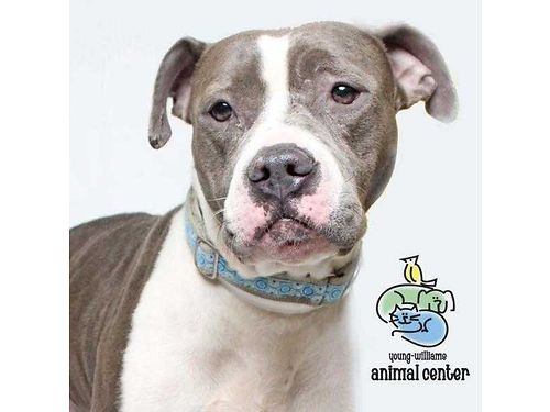 DANA is simply wonderful well-mannered calm adult dog More info Hi Im Dana I love to play and