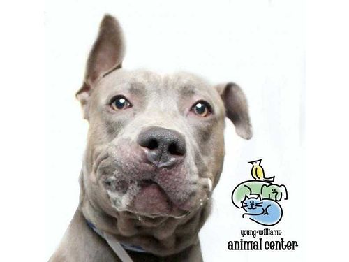 BUFFALO is a 4-year-old doggie who does not like shelter environment one bit He needs you to help h