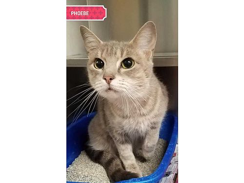 PHOEBE IS A SWEET 15 year old looking for a loving home Adoption fee 110 includes spay vaccines
