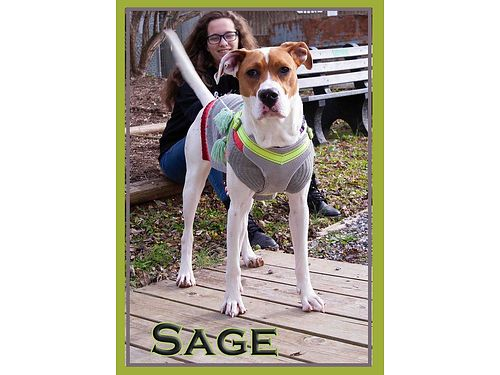 SAGE IS A BEAUTIFUL and calm 1 year female sweetheart She even has a heart right on her nose Adopt