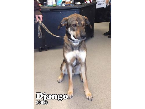 DJANGO'S A SHEPHERD MIX READY TO FIND ...