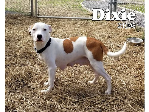 DIXIE & HER PUPS WERE SURRENDERED BY ...