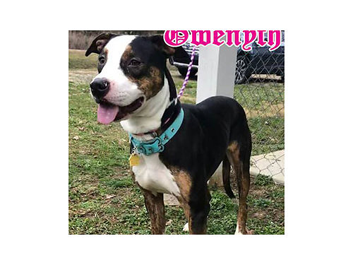GWYNETH IS A YOUNG energetic mixed breed dog that requires a tall fence as she can jump She also re