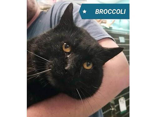 BROCCOLI IS A GIANT HUNK OF LOVE with glittery fur Even though he looks scared he allows you to pic