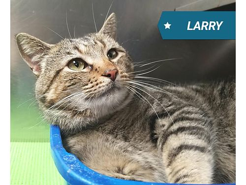 LARRY IS A SHY BUT SUPER SWEET 1 12 year old male He loves to be petted and dreams of a quiet home