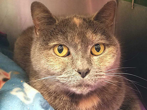 OLIVIA IS A SUPER PLAYFUL 4 year old girl She loves stringy toys Adoption fee 110 includes spay