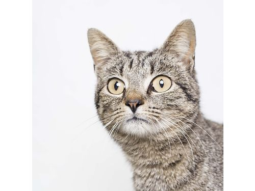 LOOK AT THIS BEAUTIFUL GIRL Moomba number 5 is a hilarious sassy easy going adult cat whos fre