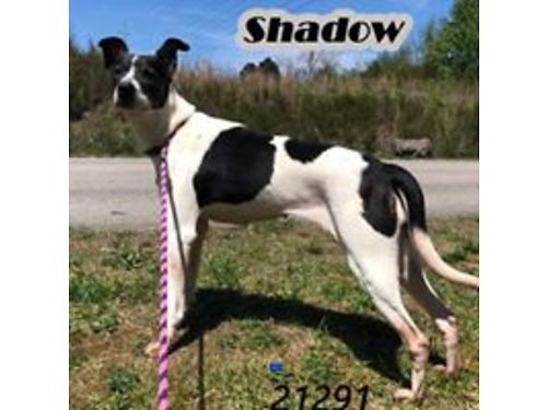 Knoxville Dogs For Sale And Adoption Knoxville Classifieds