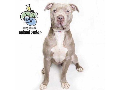 HI IM LUNA I love to play all the time I love toys and being outside I love to play with dogs m