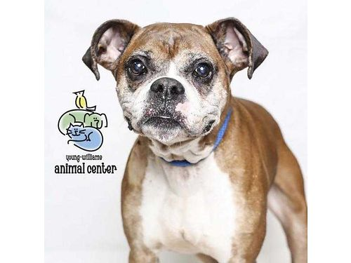 ALVAREZ IS VERY SWEET but truly needs to be in a home by himself and in a home with no kids He is