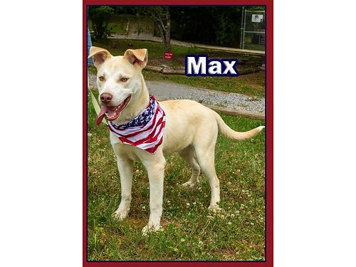MAX IS A 6 MONTH OLD lab mix that acts exactly like a puppy should He will need basic training but