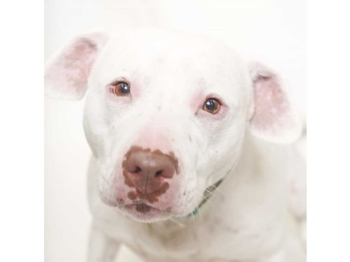 MONAS A 7YR OLD FEMALE mixed breed who has been looking for a family for over a month now Shes a
