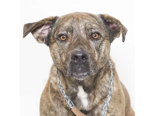 POLLYS A 7YR OLD female large mixed breed looking for a gal pal She loves kids knows how to sit o