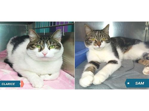SAM  CLARICE are a bonded pair of 3yr old siblings This brother  sister love each other  want to