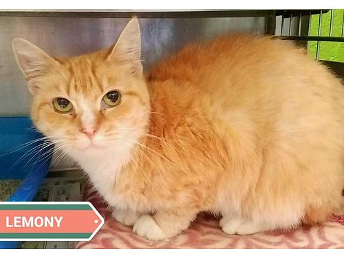 LEMONY IS A 4YR OLD companion pet that would love a home with regular love food and a window to wa