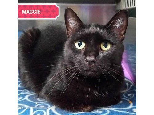 MAGGIE IS A TALKATIVE 3YR OLD THAT ...