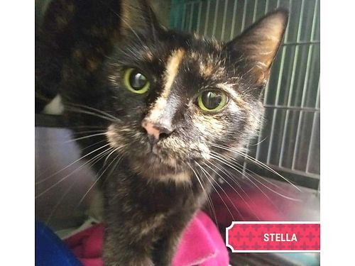STELLA IS A CURIOUS 2YR OLD THAT ...