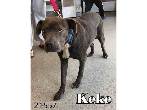 KEKE is a very friendly Lab mix girl that gets along great with kids She would love a home with a f