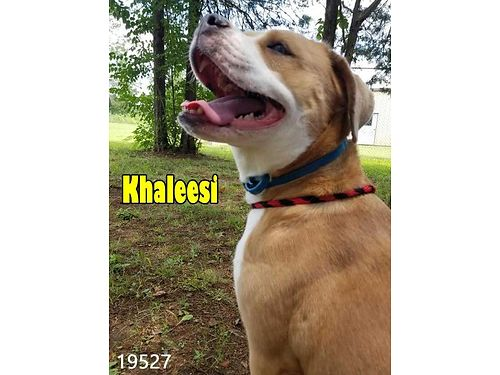 KHALEESI IS AN AWESOME dog that hates the sound of doorbells She needs a home with a knocker and sh