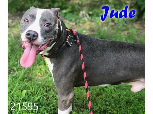 JUDES A BEAUTIFUL BOY and hes very ready to be adopted He seems to be friendly with others Adopt