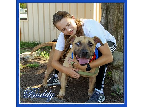 BUDDY IS A VERY LOVELY SENIOR BOY He has an injury to one eye but it is nothing to worry about Thi