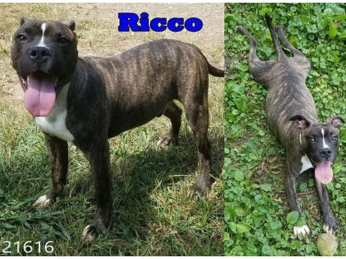 RICCO IS SUCH A CUTIE AND FRIENDLY ...