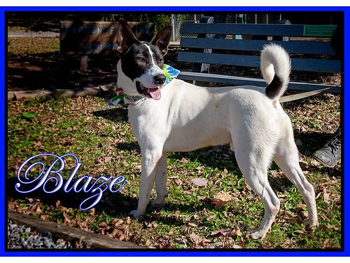 BLAZE IS A FRIENDLY MALE PUP. HE ...