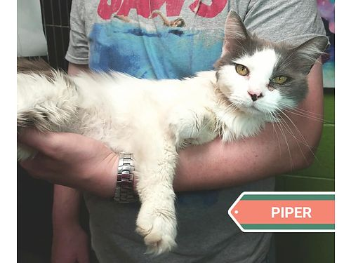 PIPER'S A VERY LOVABLE YOUNG GIRL WHO ...