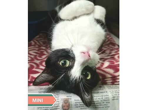 MINI IS A PLAYFUL loving 3 year old that adored people Adoption fee 110 includes spay vaccines