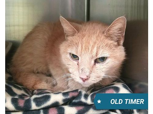 OLD TIMERS A SWEET OLD MAN THAT has seen some things and it looking for a cushy retirement Adoptio