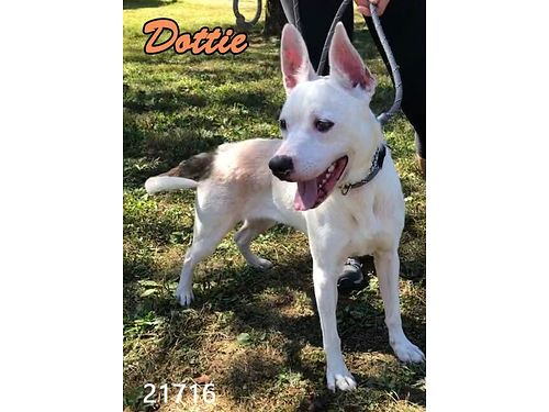 DOTTIES A YOUNG ADULT TERRIER MIX She is medium size  seems to get along well wother dogs Adopt