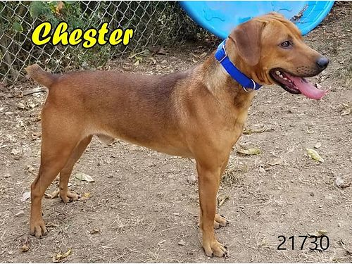 CHESTER'S A HANDSOME, FRIENDLY BOY LOOKING FOR ...