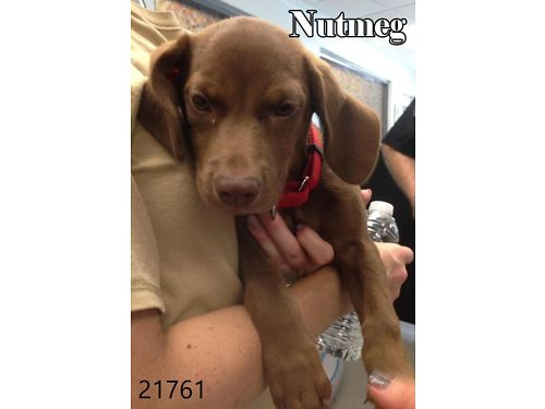 THIS LITTLE CUTIE IS NUTMEG. HE IS ...