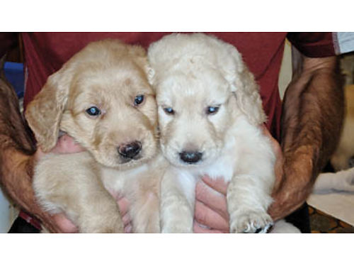 San Luis Obispo Pets for Sale and Adoption | San Luis Obispo